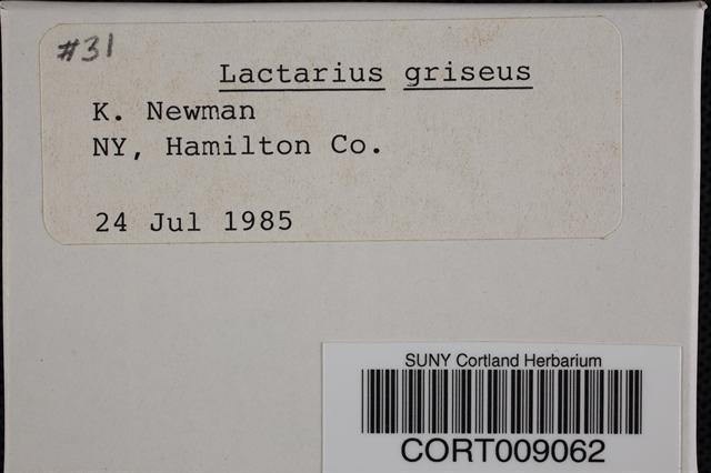 Lactarius griseus image