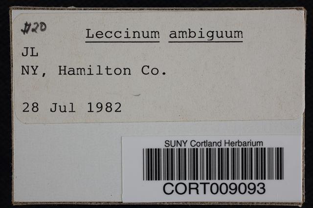Image of Leccinum ambiguum