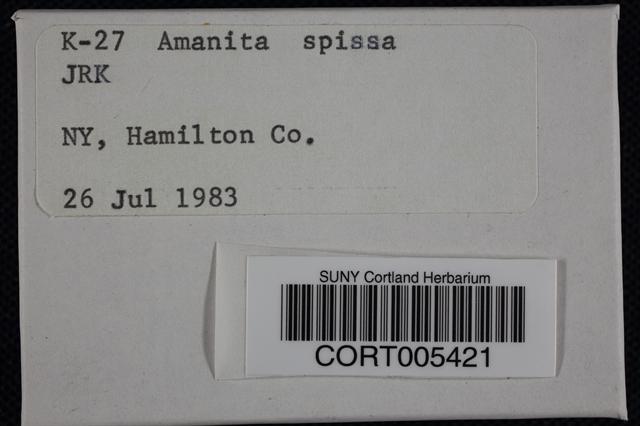 Amanita spissa image