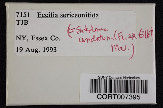 Image of Entoloma undatum