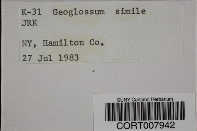 Image of Geoglossum simile