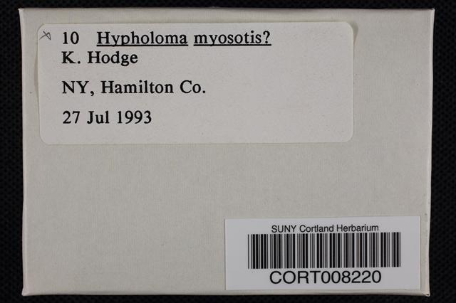 Phaeonematoloma myosotis image