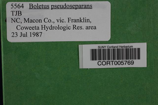 Image of Boletus pseudoseparans