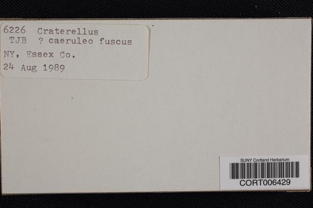 Image of Craterellus caeruleofuscus