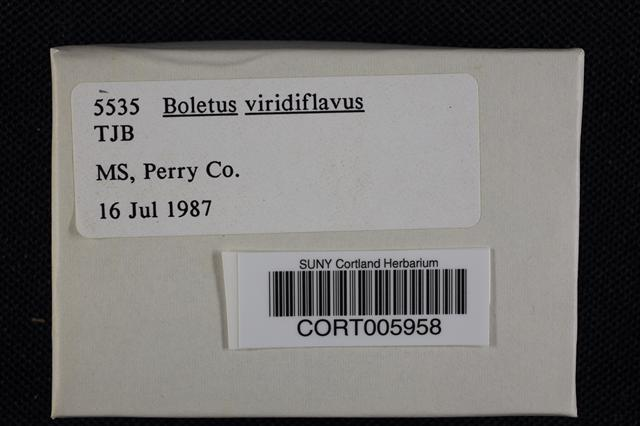 Image of Boletus viridiflavus