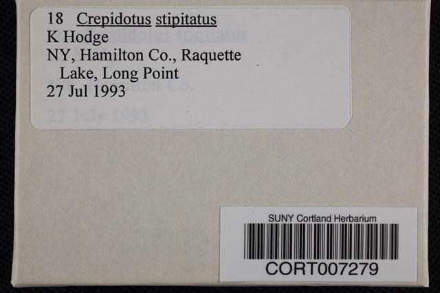 Crepidotus stipitatus image