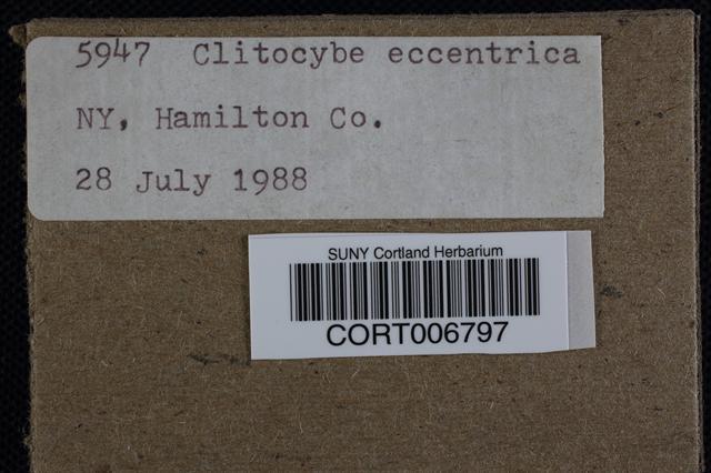 Image of Clitocybe eccentrica