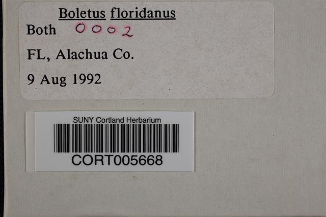 Image of Boletus floridanus