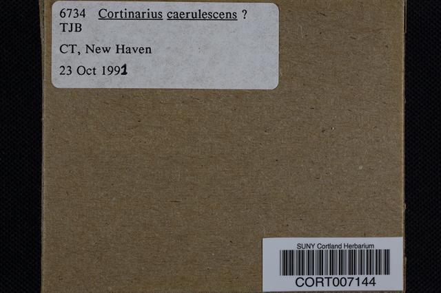 Cortinarius caerulescens image