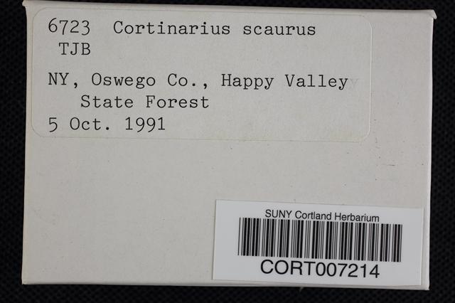 Cortinarius scaurus image