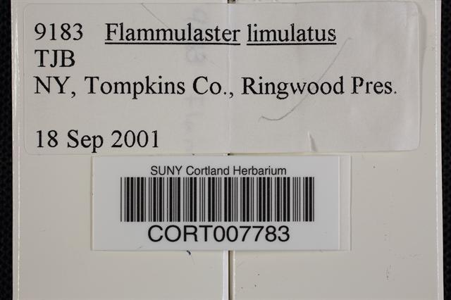 Flammulaster limulatus image