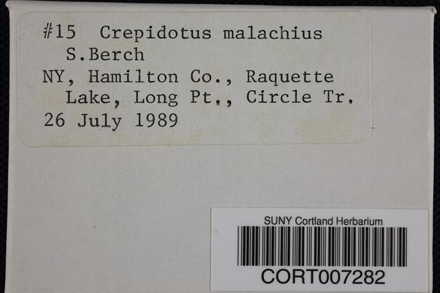 Crepidotus malachius image