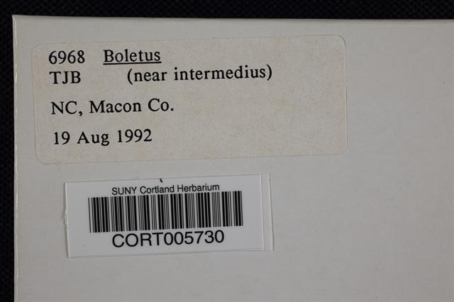 Image of Boletus intermedius
