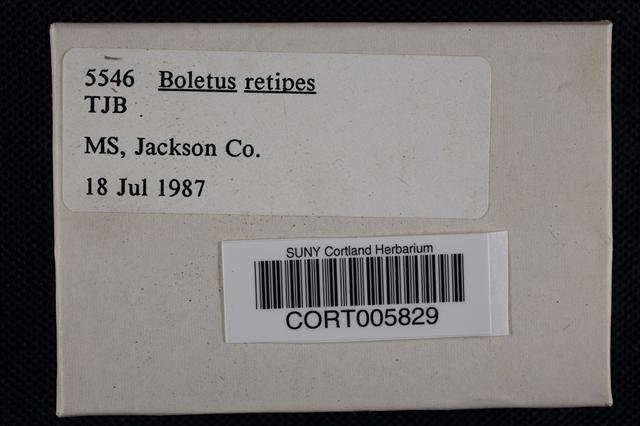 Boletus retipes image