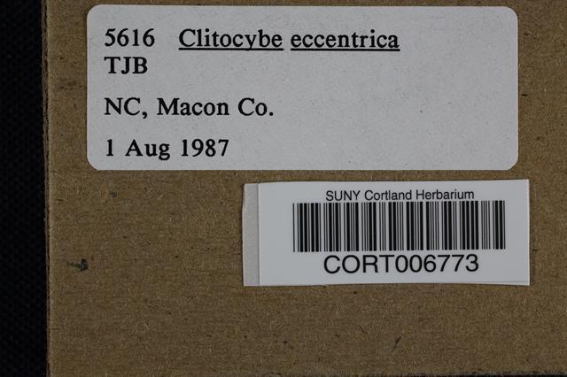 Clitocybe eccentrica image