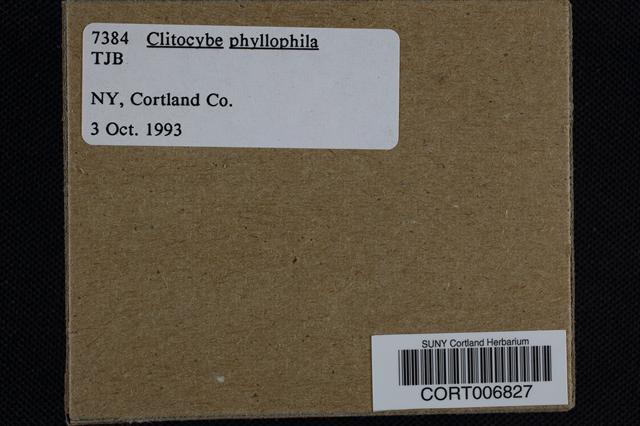 Clitocybe phyllophila image