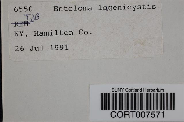 Image of Entoloma lagenicystis