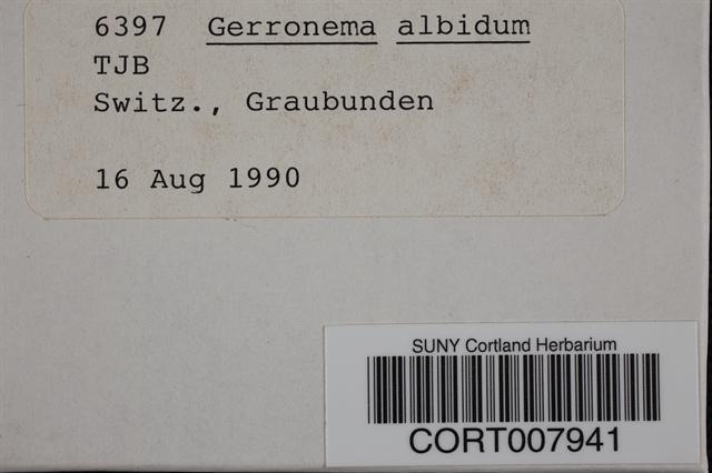 Image of Gerronema albidum