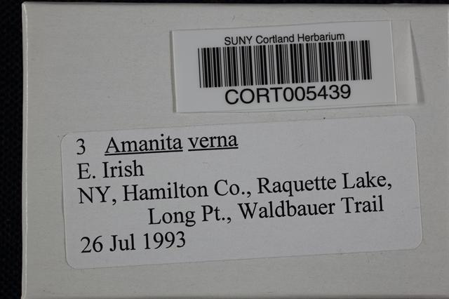 Image of Amanita verna