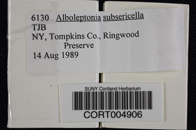 Image of Alboleptonia subsericella