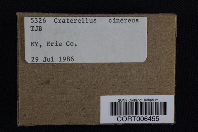 Image of Cantharellus cinereus