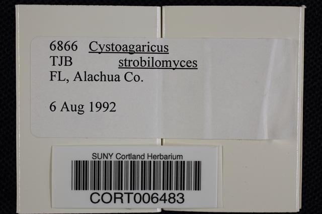 Image of Cystoagaricus strobilomyces
