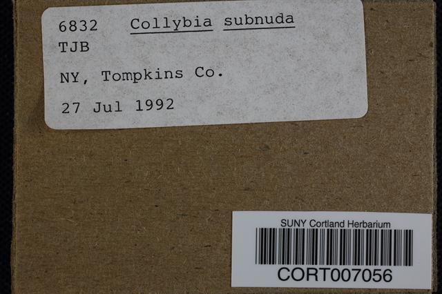 Image of Collybia subnuda