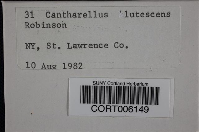 Craterellus lutescens image