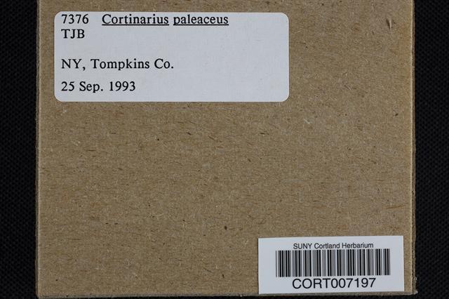 Cortinarius paleaceus image
