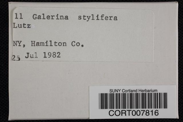 Galerina stylifera image