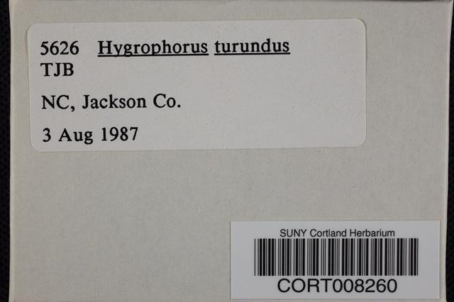 Hygrocybe turunda image