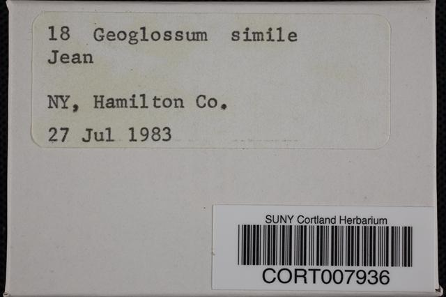 Geoglossum simile image