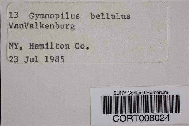 Gymnopilus bellulus image