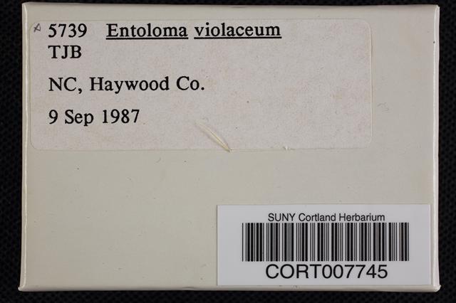Image of Entoloma violaceum