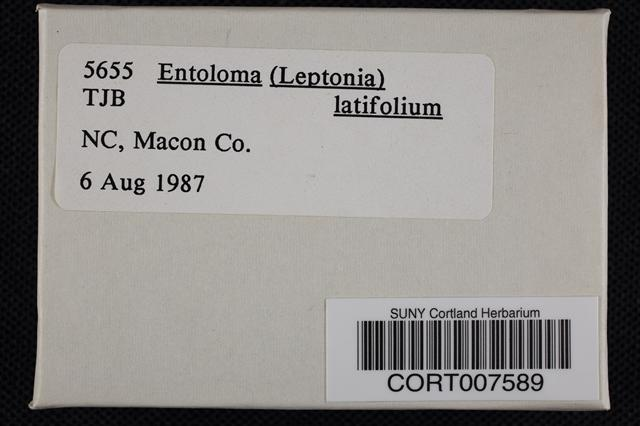 Image of Entoloma latifolium