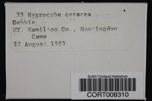 Hygrocybe ceracea image