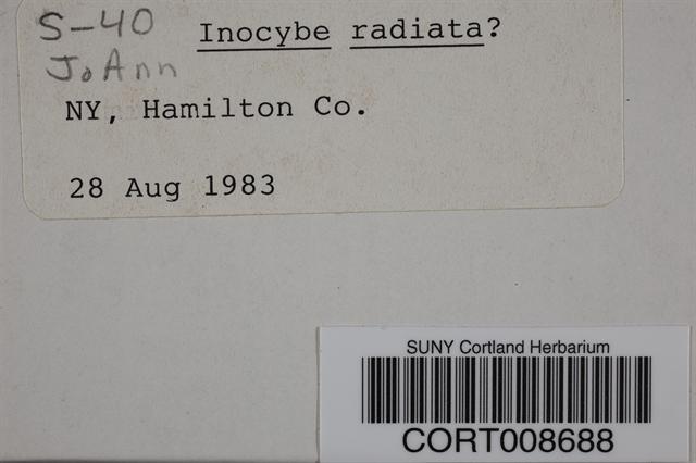 Inocybe radiata image