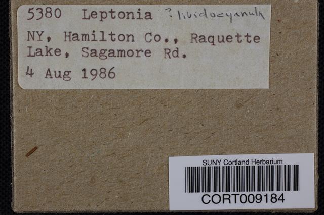 Image of Entoloma lividocyanulum