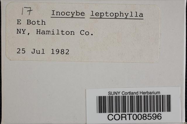 Inocybe leptophylla image
