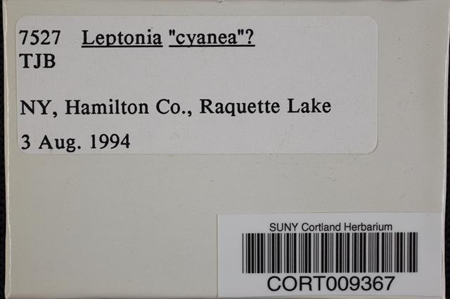 Leptonia cyanea image