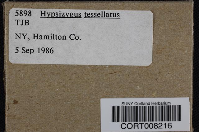 Hypsizygus tessulatus image