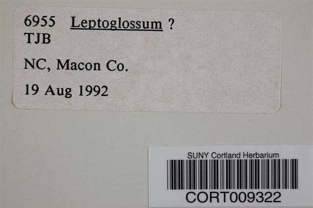 Leptoglossum image