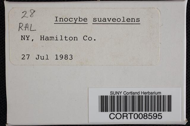 Inocybe suaveolens image