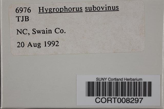Image of Hygrophorus subovinus