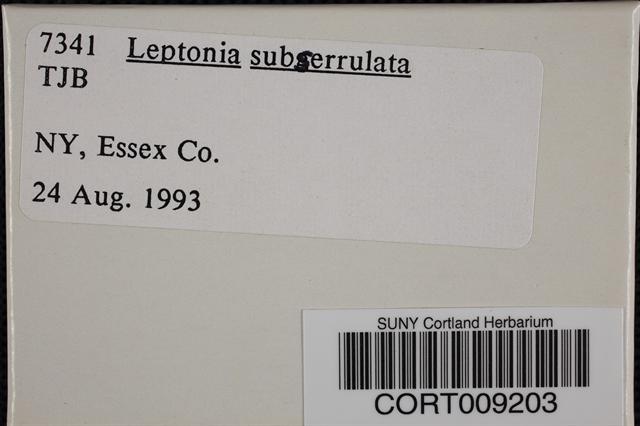 Image of Leptonia subserrulata
