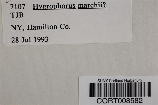 Image of Hygrophorus marchii