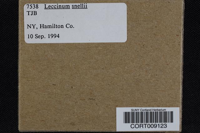 Leccinum snellii image