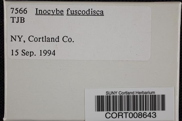 Inocybe fuscodisca image