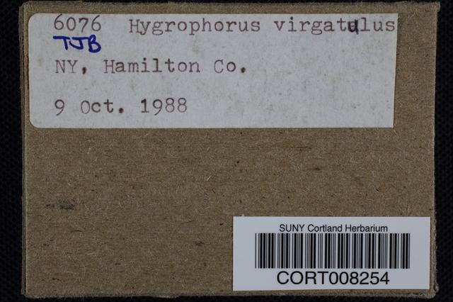 Image of Hygrophorus virgatulus