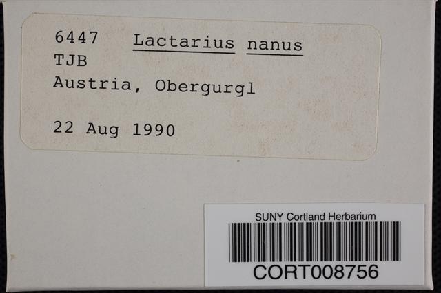 Image of Lactarius nanus